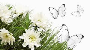 butterfly tag wallpapers page 4 white flowers butterflies autumn