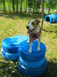 Dog Playground Equipment Backyard by 69 Best Dogblog Images On Pinterest Animals Puppies And Collie Dog