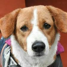where can i buy a from where can i buy a in delhi dogs pets quora
