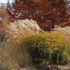 Garden Express Summer Catalogue - high country gardens pioneers in sustainable gardening