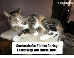 Sarcastic Cat Meme - 25 best memes about sarcastic cat sarcastic cat memes