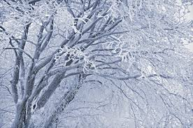 frosted tree stock image image of mist weather white 12539001