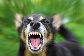 dog bites cause 1 000 emergency room visits per day richard
