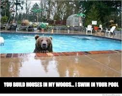 Funny Swimming Memes - funny cat meme swimming pool funny pics story