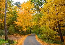 free images nature sunlight yellow season trees autumn mood
