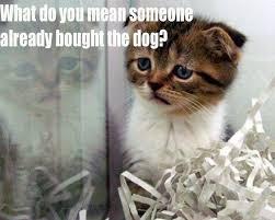 Cute Kittens Meme - cute kitten memes 28 images cute cat memes tumblr image memes at