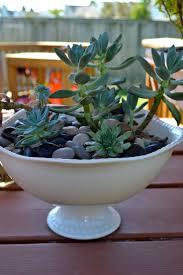8 best succulents in baskets images on pinterest flower