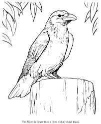 realistic animal coloring pages 108 best line drawings for literacy images on pinterest literacy