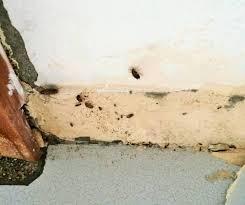cafard cuisine désinsectisation des punaises de lit cafards blattes puces
