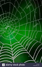 spider web transparent background morning dew shining water drops on spiderweb over green forest