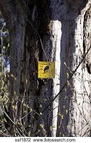 stock photo of sign designates dead tree as a wildlife tree