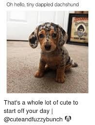 Weiner Dog Meme - 25 best memes about dachshund dachshund memes