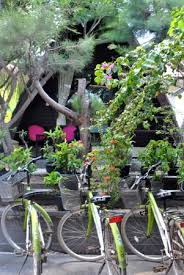 Bungalows And Cottages by Surrounding Area Picture Of Ozzy Cottages And Bungalows Gili