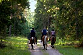 Mohican State Park Campground Map Salt Fork Horse Riding State Park Lodge Rooms And Cabins Near