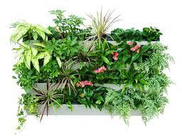 Self Watering Wall Planters Amazon Com Savvygrow Bloomwall Vertical Planter With Savvy Edge
