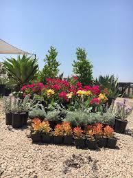 wholesale plant nursery annuals gazanias riverside caa f