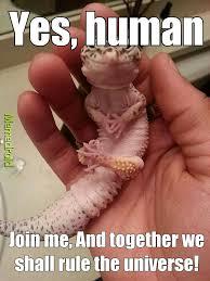Lizard Meme - evil lizard meme by shazzy waseem memedroid