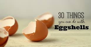 ground eggshells 30 things to do with eggshells the prairie homestead