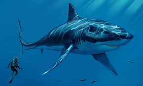 biggest megalodon shark megalodon sharkopedia