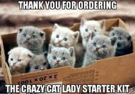 Cat Meme Ladies - 10 hilarious memes only cat ladies will understand