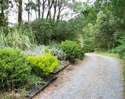 Small Shrubs For Front Yard - driveway shrubs