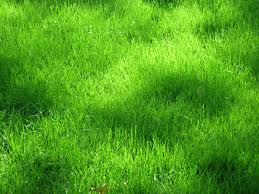 Beautiful Texture Download Texture Green Grass Texture Texture Download Photo