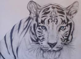 white siberian tiger by merkira on deviantart