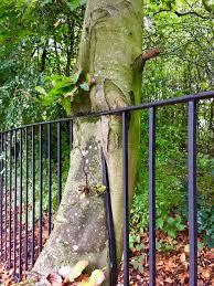 tree fighting back