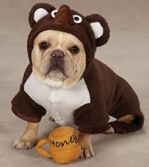 Cute Dog Halloween Costumes 51 Dog Halloween Costumes Images Animals Pet