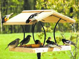 hummingbird house plans wood bird feeders plan dream wood design pigeon bird house plans