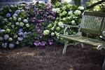 The First hydrangeas that bloom all season long | Endless Summer ...