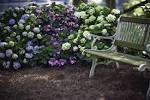 The First hydrangeas that bloom all season long | Endless Summer ...