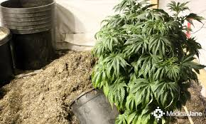grow marijuana ultimate organic guide