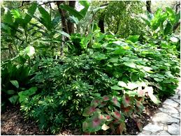 Tropical Rainforest Plant List - garden tips tropical plants and central tx