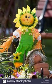 sunflower scarecrow garden ornament stock photos u0026 sunflower