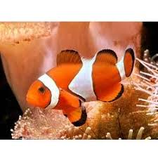 marine aquarium fishes and marine fishes importer reef