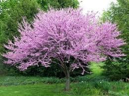 the best shrubs for landscaping low maintenance shrubs for