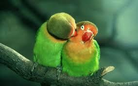 imagenes para pc chistosas hermosas imágenes en hd de fondos de pantallas de animalitos super