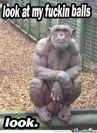 Meme Monkey - monkey by mogm meme center