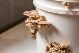 how to grow mushrooms indoors diy