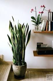 best low light house plants office design tall office plants tall skinny office plants tall