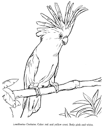 how to draw a cockatoo animals drawings wildlife id and