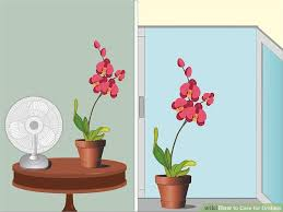 orchids care how to care for orchids 14 steps with pictures wikihow