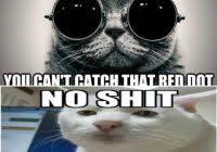Morpheus Meme Generator - unique morpheus cat meme what if i told you matrix morpheus meme
