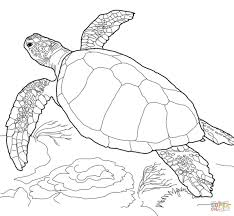 loggerhead sea turtle coloring free printable coloring pages