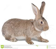 animal stock photos images u0026 pictures 2 342 401 images