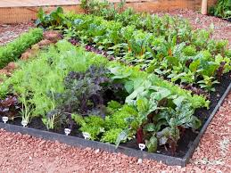 raised beds from hgtv hgtv