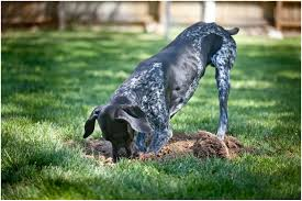 backyards innovative plain small backyard ideas for dogs exactly