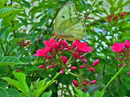 florida native plants photos attracting butterflies to your miami garden the 16 best