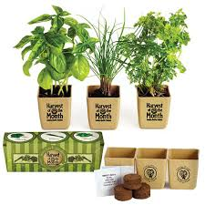 Desk Plant Promotional Plants Desk Plants Desktop Promotional Plants